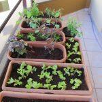 Hortas em varandas e terraços: ideias úteis para ter uma