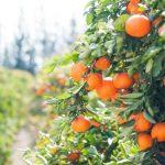 Oferta de emprego: TRAINEE AGRÓNOMO – Licenciado em Agronomia ou Agropecuária – Viseu