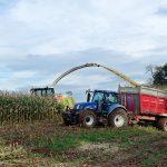 Ferramentas para uma ótima produção de milho para silagem: tudo o que deve saber