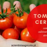 Como cultivar tomate-cereja: tudo o que deve saber