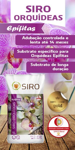 substrato para orquídeas