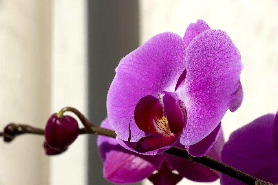 recuperar orquídea