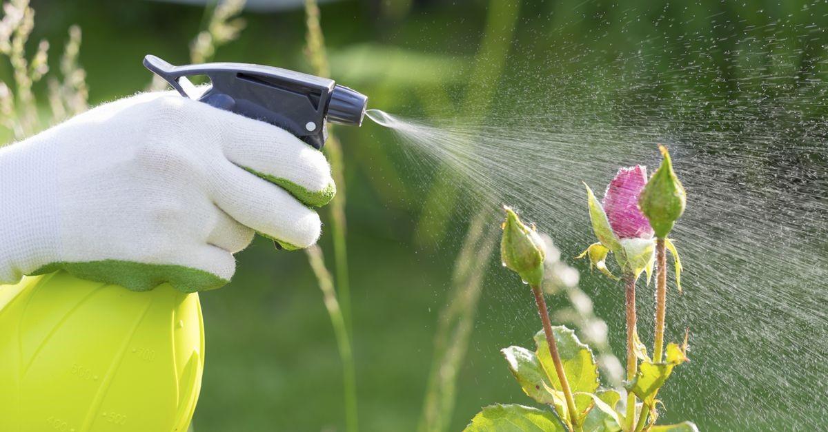 fertilização adubação foliar