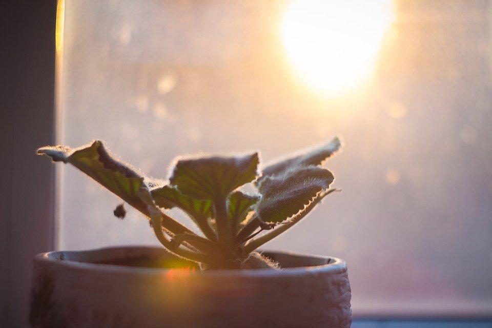 como cuidar das plantas de interior