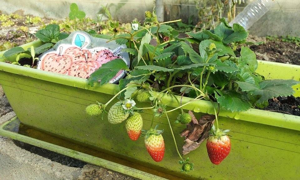 como fazer horta urbana