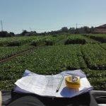 Produção de  soja em Portugal: resultados dos ensaios