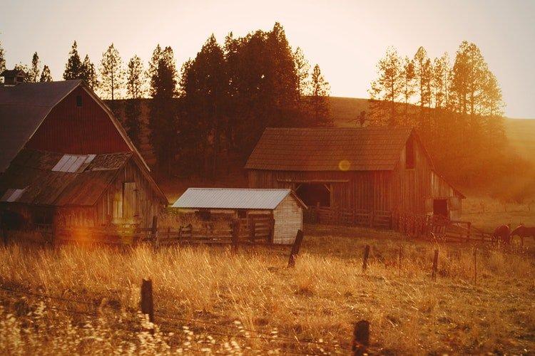 caderno de campo agricultura