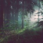 É imprescindível a inovação no planeamento operacional do setor florestal