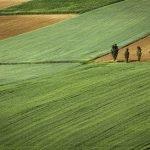 Rotação de culturas agrícolas: porque são tão importantes?