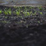 Consociação de culturas favoráveis e desfavoráveis em Agricultura Biológica