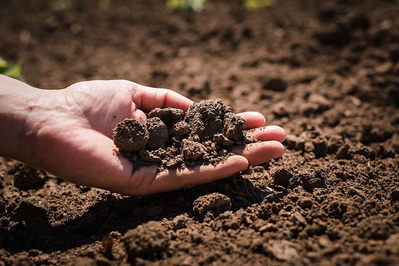 produtividade agrícola por hectare