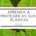 Tudo o que deve saber para proteger as suas plantas