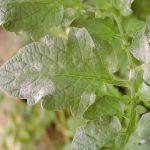 Doenças nas plantas: fique a conhecer as principais