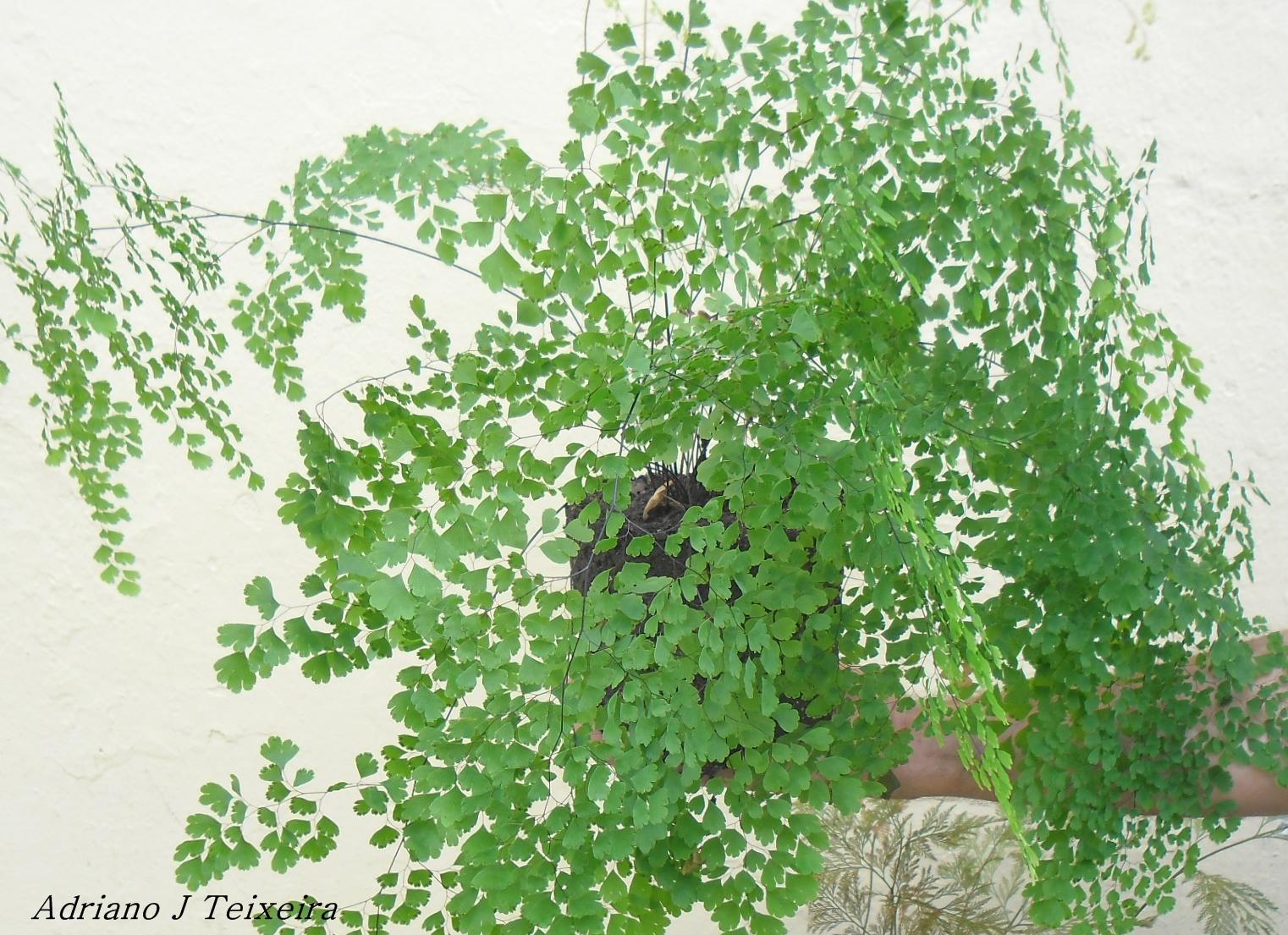plantas de interior como tratar