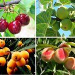 Saiba quais são as árvores de fruto que deve plantar na sua  horta ou jardim