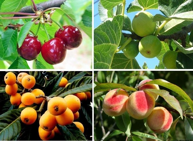Árvores de fruto para pequenos jardins e hortas  saiba quais as adequadas 89b99d2585a