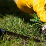 Como cuidar do jardim: principais problemas dos relvados (Parte III)