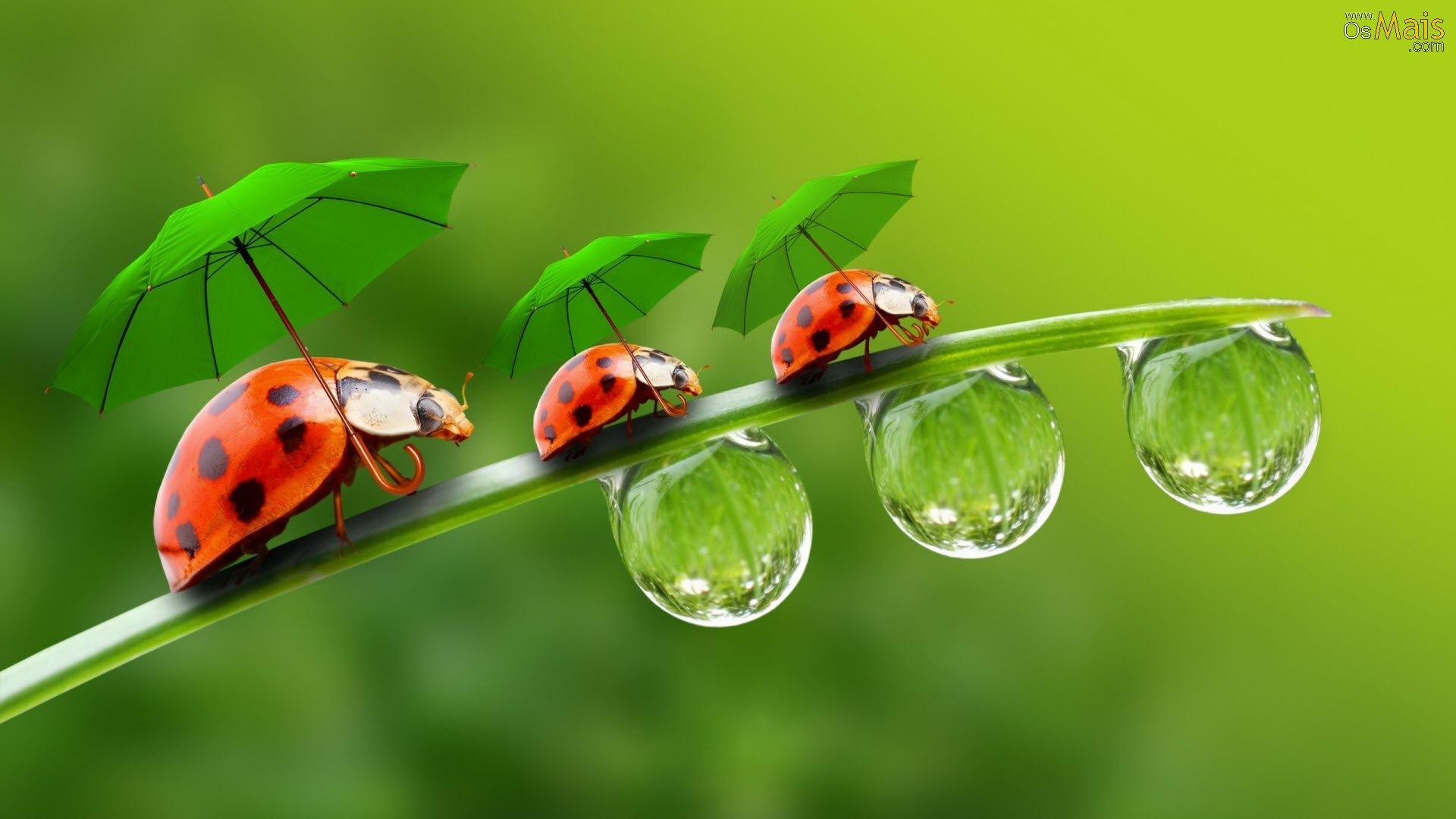 Proteger as plantas-joaninhas