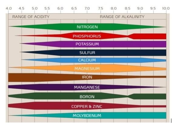 importância do pH no solo-gráfico