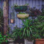 Tipos de plantas e qual o seu lugar no jardim