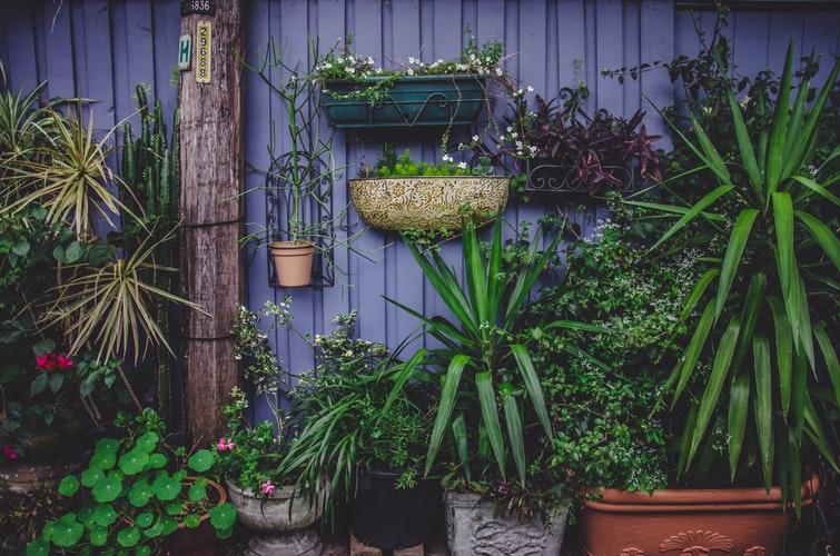 cuidar do jardim para que elas venham até você