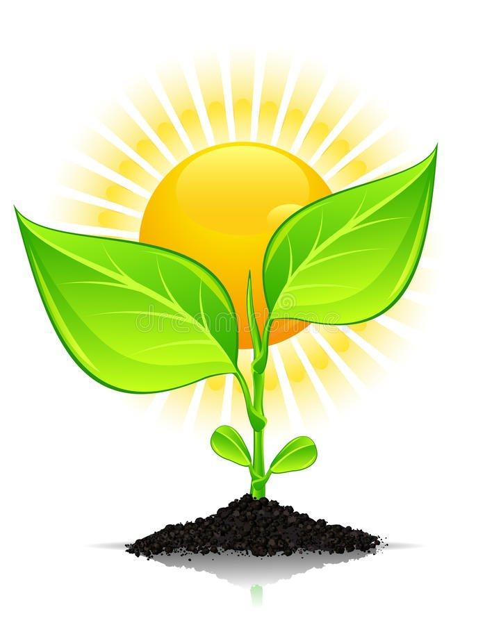 plantas de varanda precisam de sol