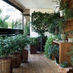 Plantas de varanda e de interior: a influência da luminosidade (Parte I)