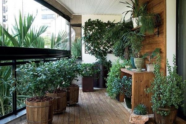 plantas de varanda e interior