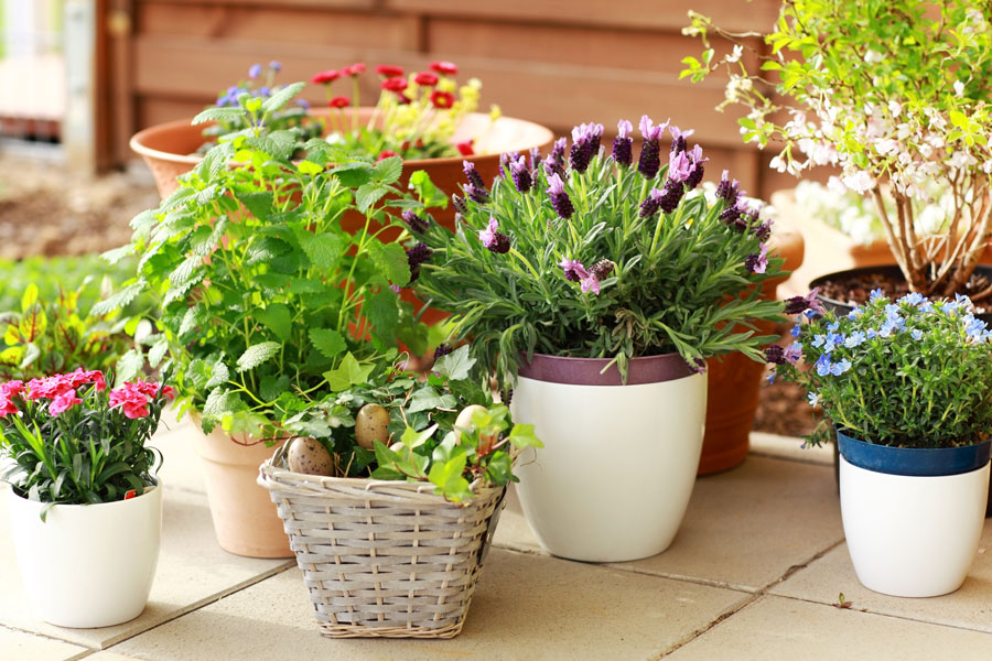 proteger as plantas- plantas envasadas