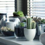 Plantas de varanda e interior: exigências de temperatura (Parte II)