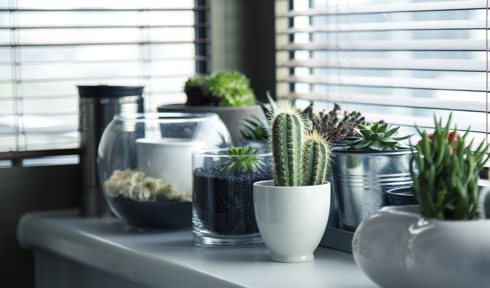 plantas de interior que precisam de pouca luz