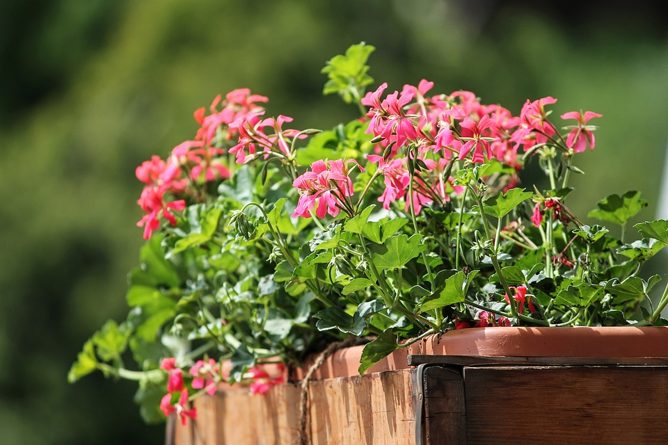 plantas de interior com flor