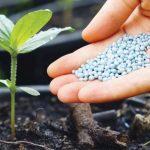 Saiba como adubar correctamente as suas plantas e aprenda a identificar carências nutricionais