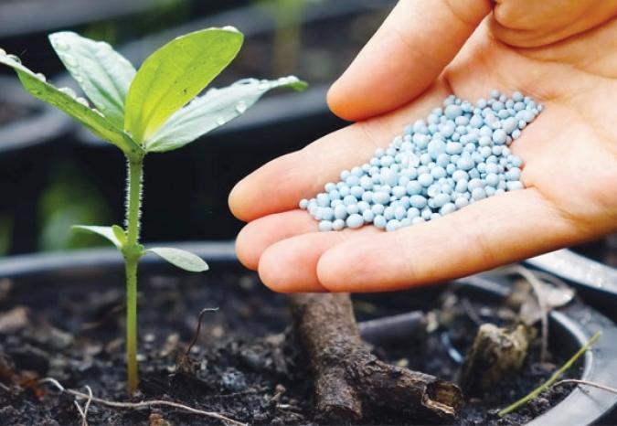 Adubação das plantas: como fazer e identificar carências nutricionais