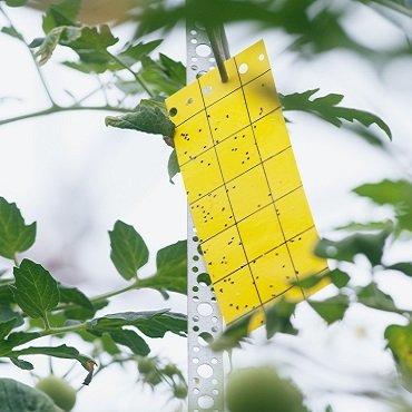 eliminar pragas nas plantas pragas nas folhas das plantas