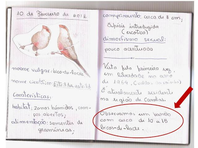 caderno de campo exemplo