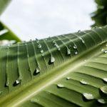 Aumentar irrigação para o dobro permitiria alimentar mais 2,8 mil milhões