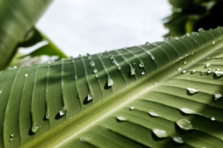 necessidades de águas nas plantas