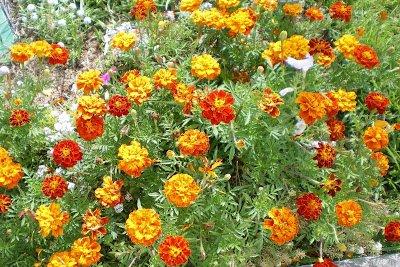 plantas para a horta pequena