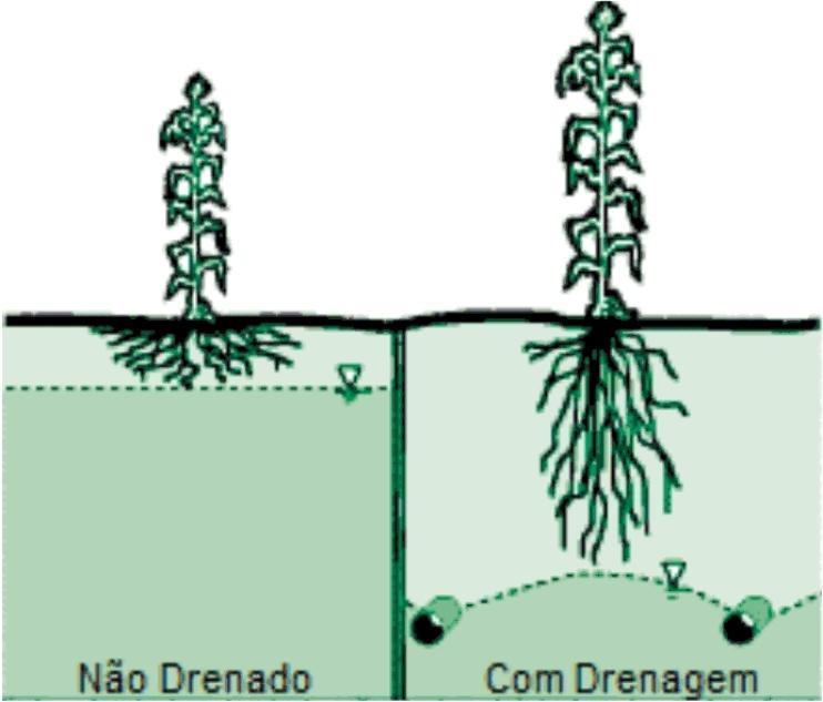 drenagem do solo como fazer agricultura