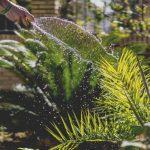Necessidade de água nas plantas de interior: principais cuidados a adotar