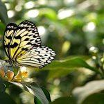 Saiba como proteger as plantas das altas temperaturas