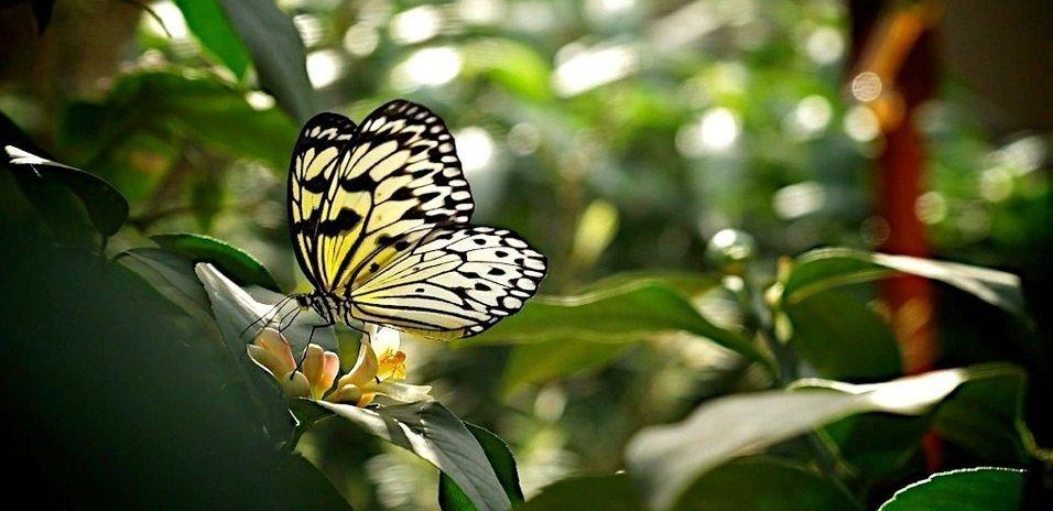 como atrair borboletas no jardim