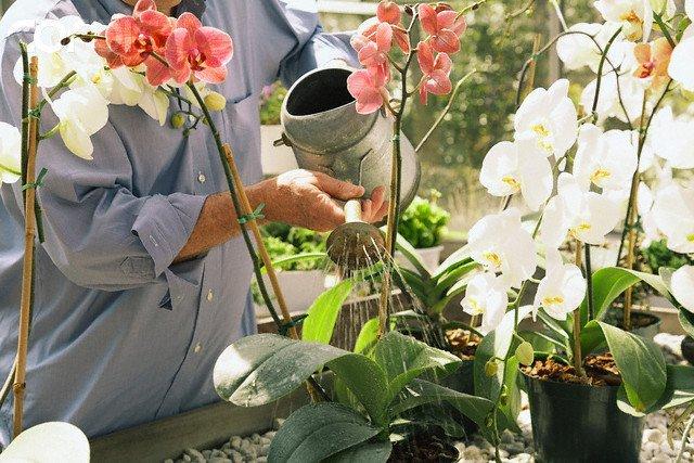 como tratar de plantas de interior orquideas