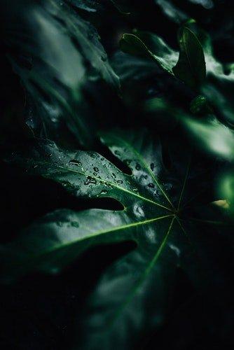 a importancia da água nas plantas