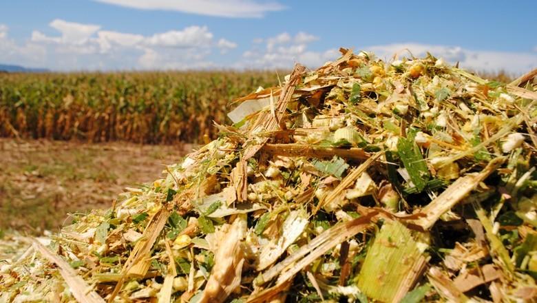 principais pragas no milho
