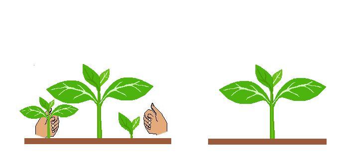 semear relva jardim