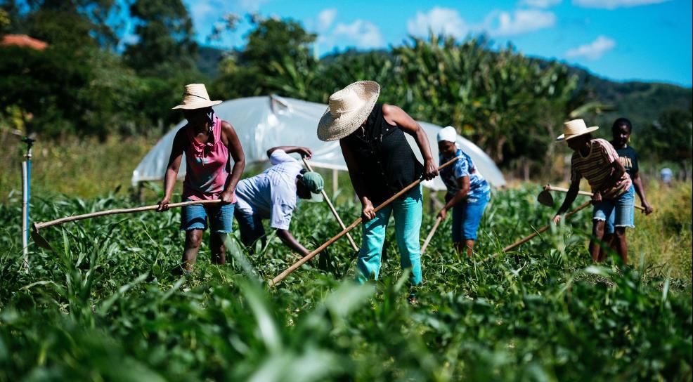 agricultura familiar conceito