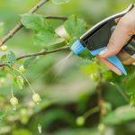 Fertilização foliar: qual a sua importância para as culturas agrícolas