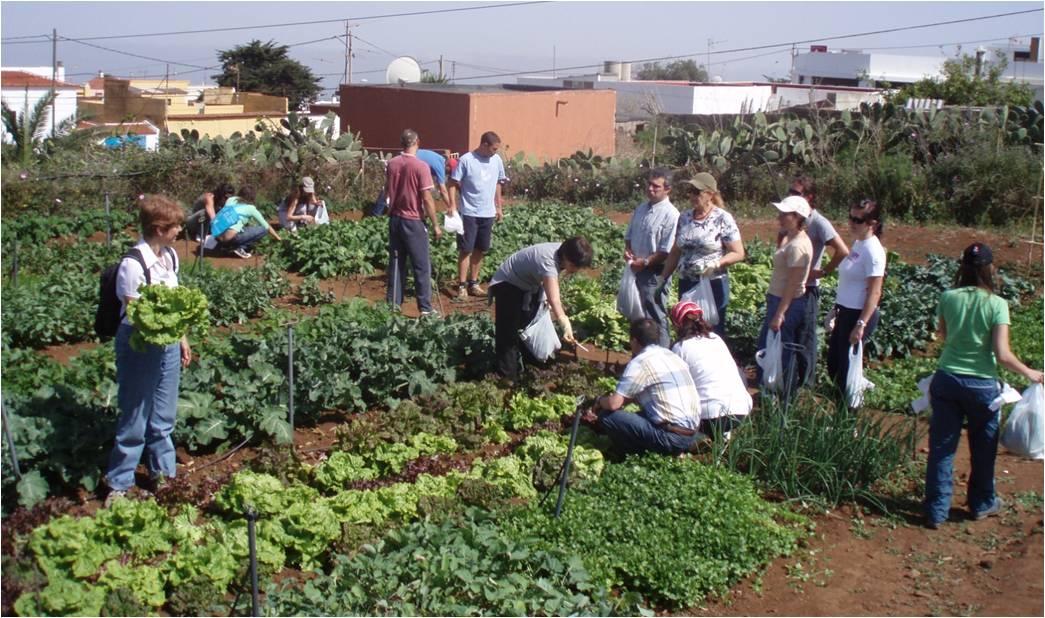 horticultura terapeutica pdf